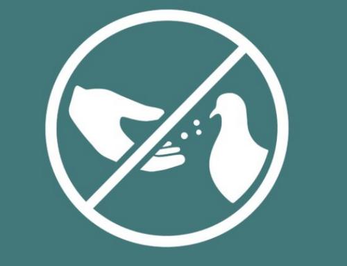 No donis menjar als coloms