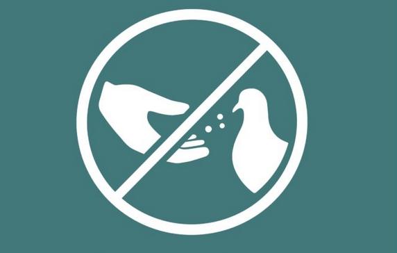 Prohibit alimentar als coloms